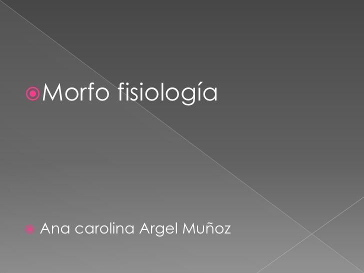 Morfo fisiología<br />Ana carolina Argel Muñoz<br />
