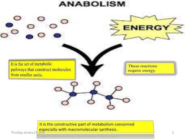 anabolic reaction definition biology