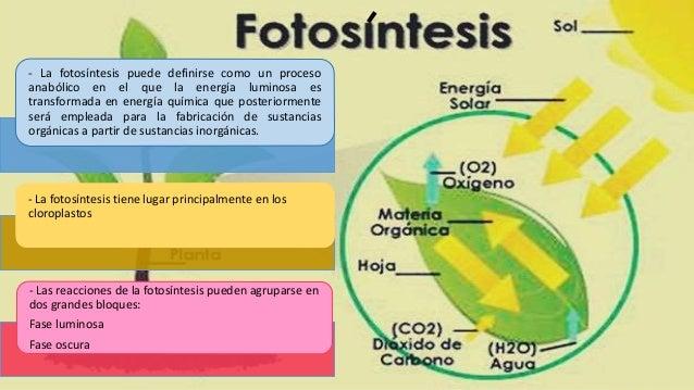 En ella se produce la captación de la energía de la luz y su transformación en energía química, concretamente en moléculas...