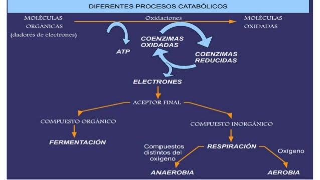 Anabolismo catabolismo