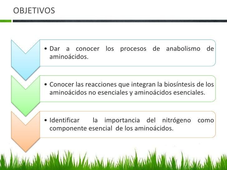 Anabolismo de aminoacidos