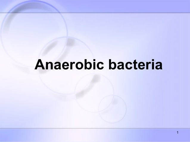Anaerobic bacteria spring 2011