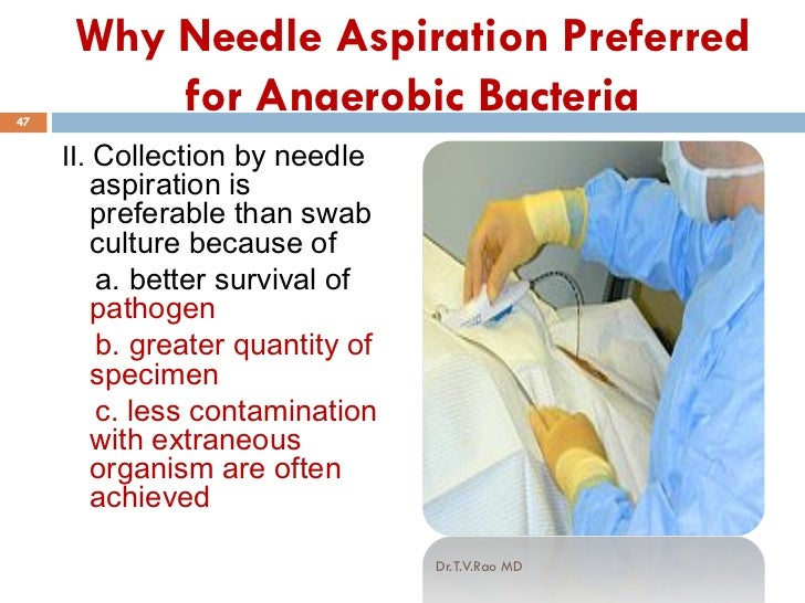 What is anaerobic bacteria? - paperwingrvice.web.fc2.com