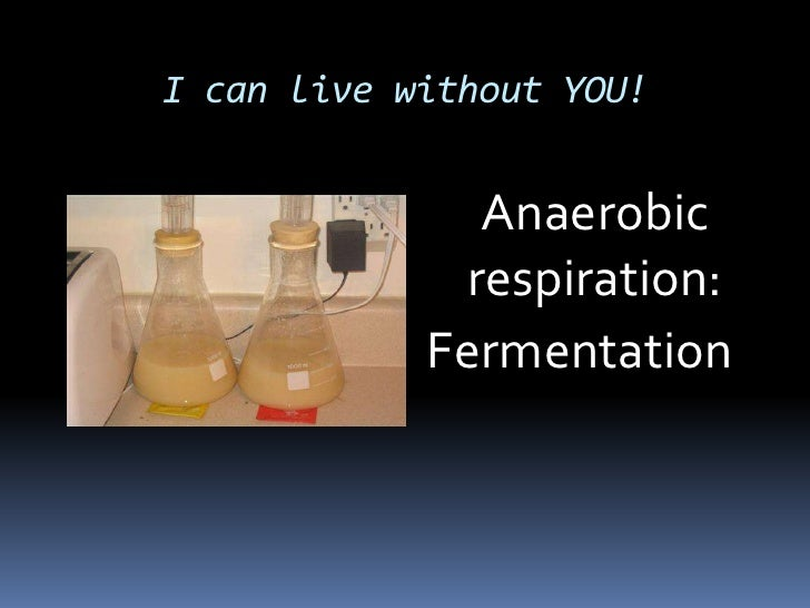 I can live without YOU!<br />	Anaerobic respiration:<br />Fermentation <br />