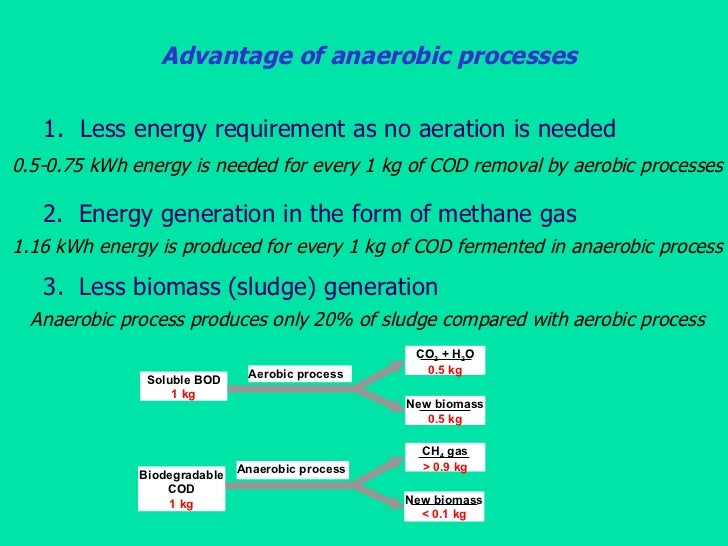 advantages of anaerobic respiration essay Anaerobic respiration takes place in yeast and some bacteria, producing ethanol and carbon dioxide they have been used in the making of many foods such as bread, yoghurt and vinegar, lactic acid bacteria are the key ingredient in yogurt production as they they initiate the fermentation process.