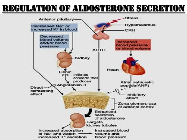 cortisone steroids weight gain