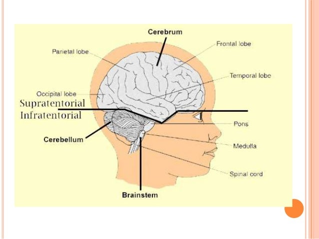 Function of the cerebellum yahoo dating 3