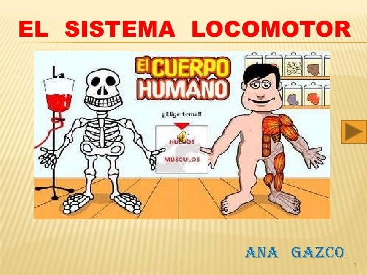 EL SISTEMA LOCOMOTOR                  ANA GAZCO                          1