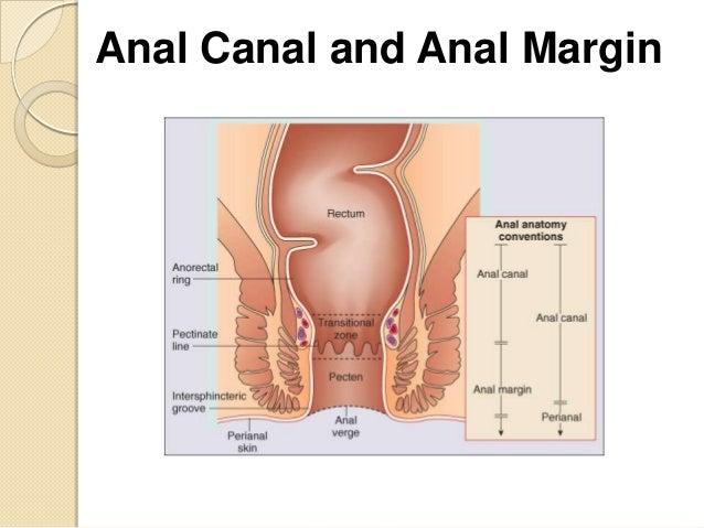 Anal sex talk