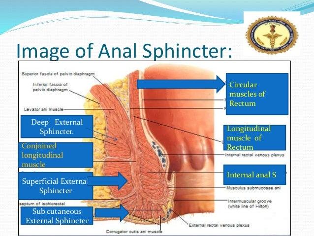 Anil kumar anal