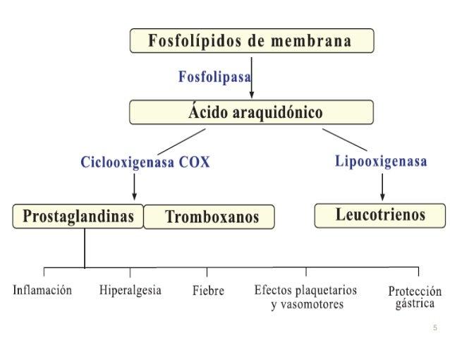 las prostaglandinas son esteroides