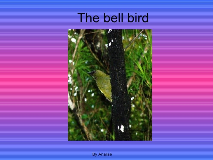 The bell bird By Analise
