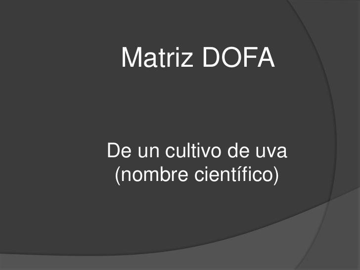 Matriz DOFADe un cultivo de uva (nombre científico)