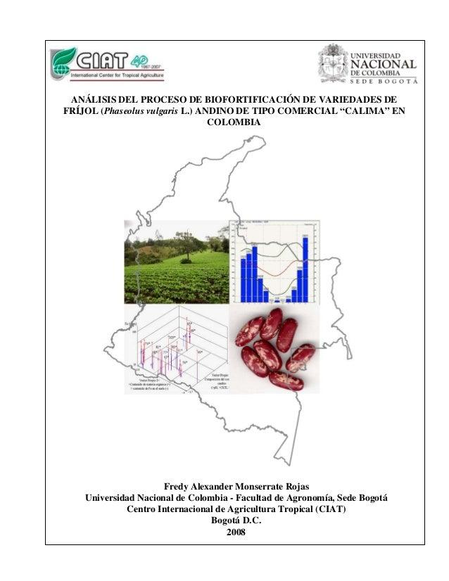 """ANÁLISIS DEL PROCESO DE BIOFORTIFICACIÓN DE VARIEDADES DE FRÍJOL (Phaseolus vulgaris L.) ANDINO DE TIPO COMERCIAL """"CALIMA""""..."""