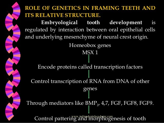 the role of genetics Deoxyribonucleic acid (dna) is a nucleic acid that contains the genetic instructions for the development and function of living things all known cellular life and some viruses contain dna the main role of dna in the cell is the long-term storage of information it is often compared to a.