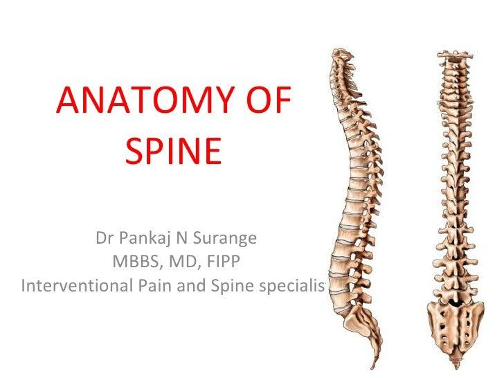 spine anatomy - Kubre.euforic.co