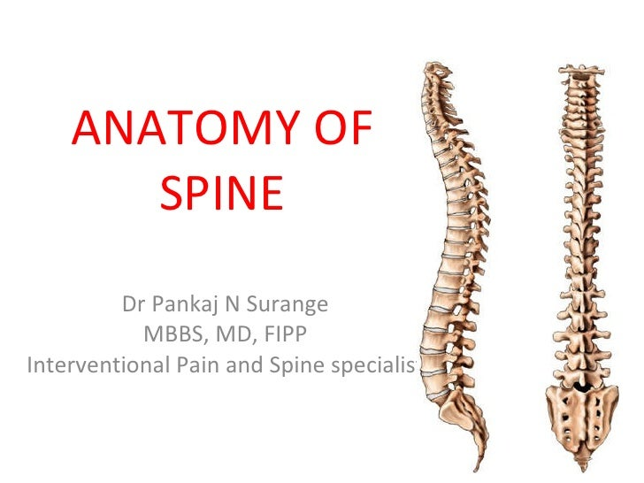 anatomy of spine, Human Body