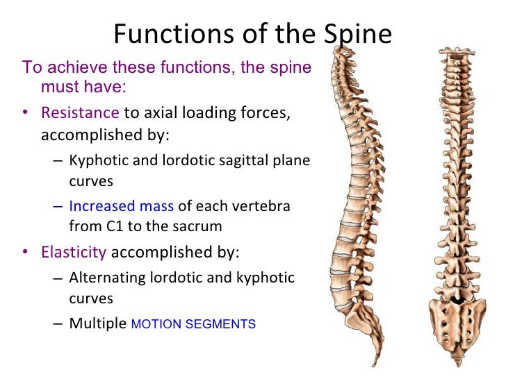 anatomy of spine, Cephalic Vein