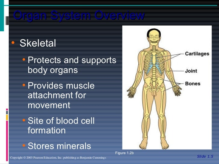 Anatomy and Physiology Chapter 1 - Introduction to Anatomy and Physio…