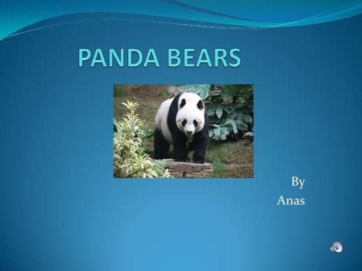 PANDA BEARS<br />By<br />Anas<br />