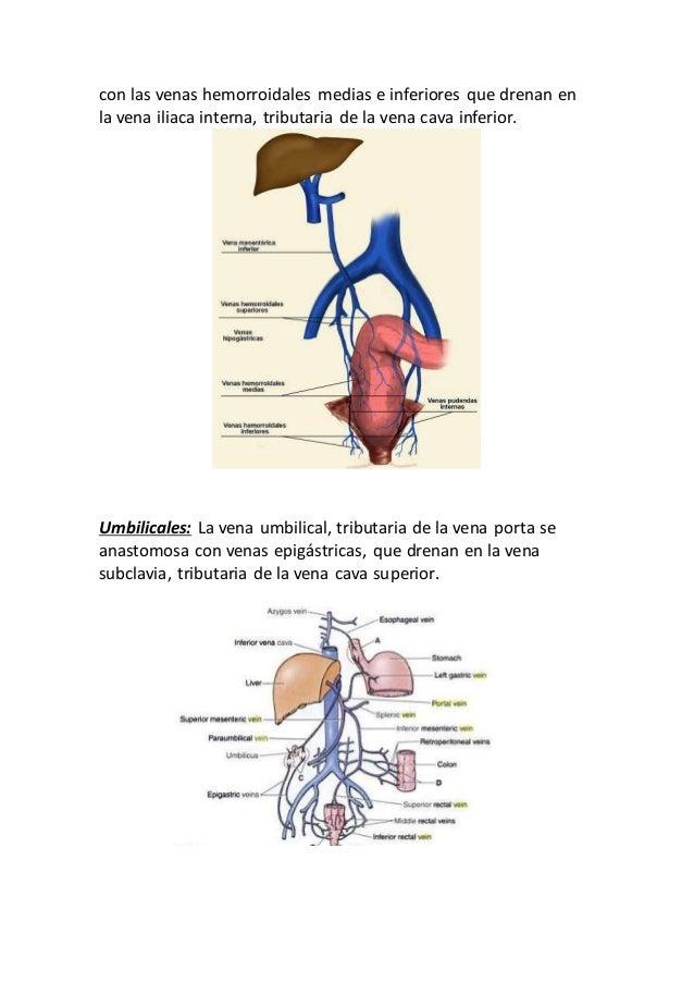 Famoso La Anatomía De La Vena Hemorroidal Colección - Imágenes de ...
