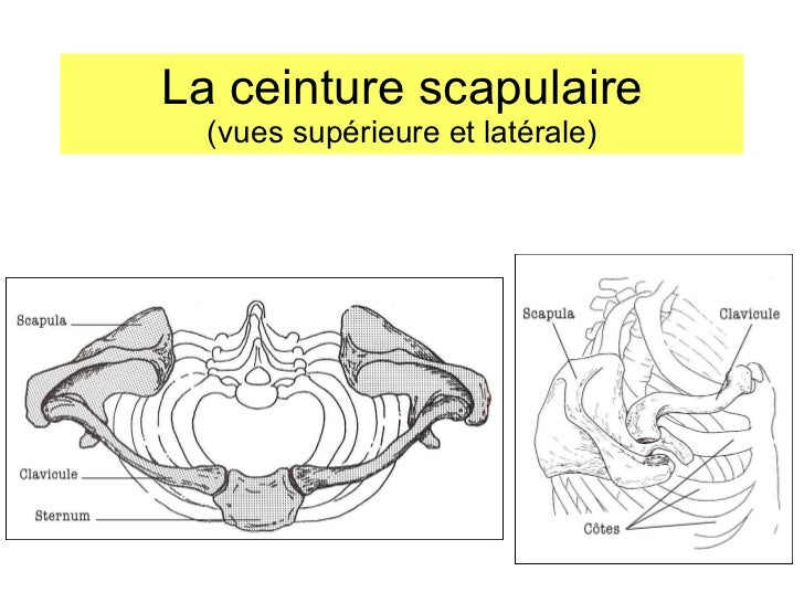 12 muscles of the with Ceinture Scapulaire Anatomie 6273 on Anatomy Difference Between Male And Female Human Skeleton Male Vs Female Human Anatomy Diagram likewise Ceinture Scapulaire Anatomie 6273 also C38eb 34afa4 in addition Afternoon Eye Candy Jay Hernandez 22 Photos moreover Human Anatomy Leg Bones Human Anatomy Details.