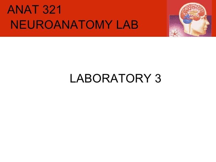 ANAT 321 LABORATORY 3 NEUROANATOMY LAB