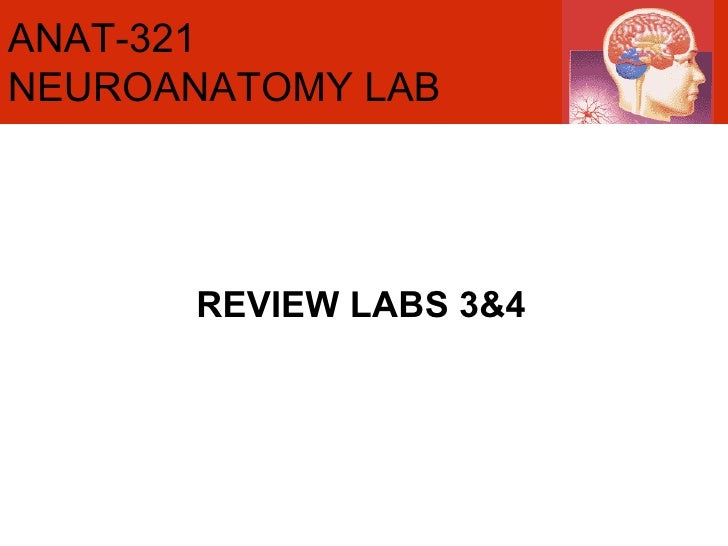 REVIEW LABS 3&4 ANAT-321 NEUROANATOMY LAB