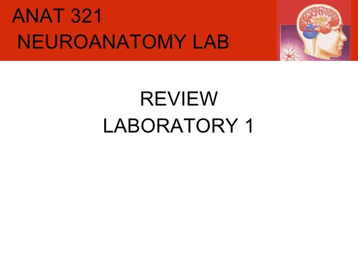ANAT 321 REVIEW LABORATORY 1 NEUROANATOMY LAB