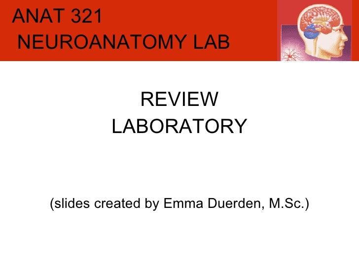 ANAT 321 REVIEW LABORATORY (slides created by Emma Duerden, M.Sc.) NEUROANATOMY LAB