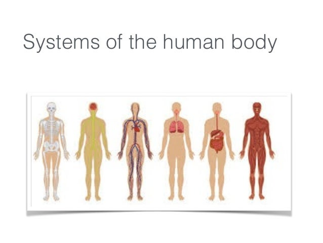 Anatamy Body Systems Pdf
