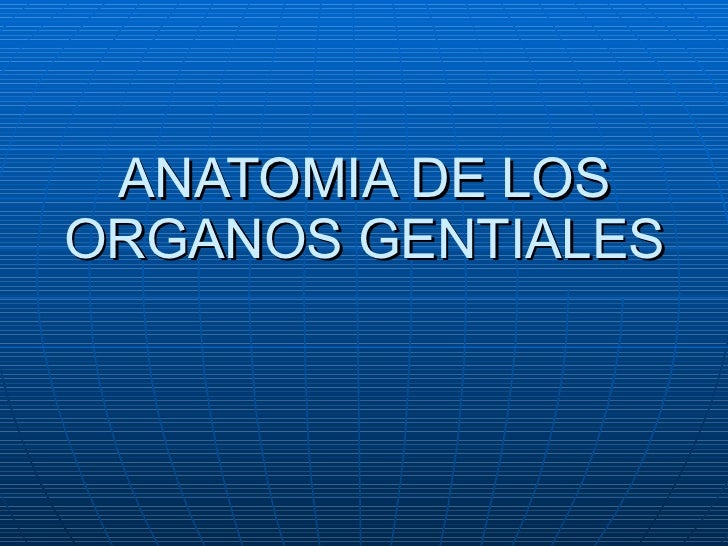 ANATOMIA DE LOS ORGANOS GENTIALES