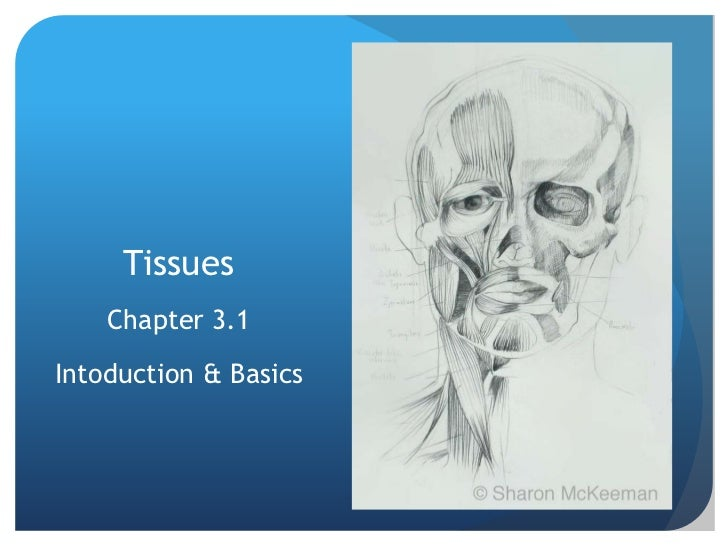 Tissues<br />Chapter 3.1<br />Intoduction & Basics<br />