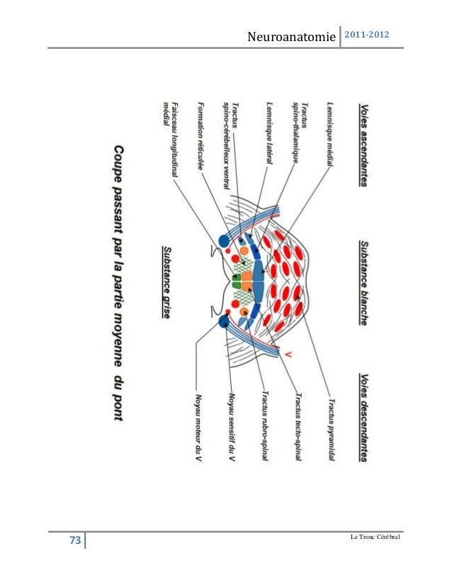 Anatmie neuroanatomie tome i