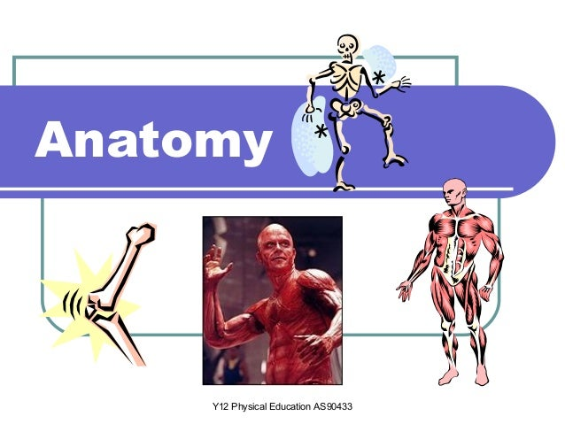 Y12 Physical Education AS90433 Anatomy
