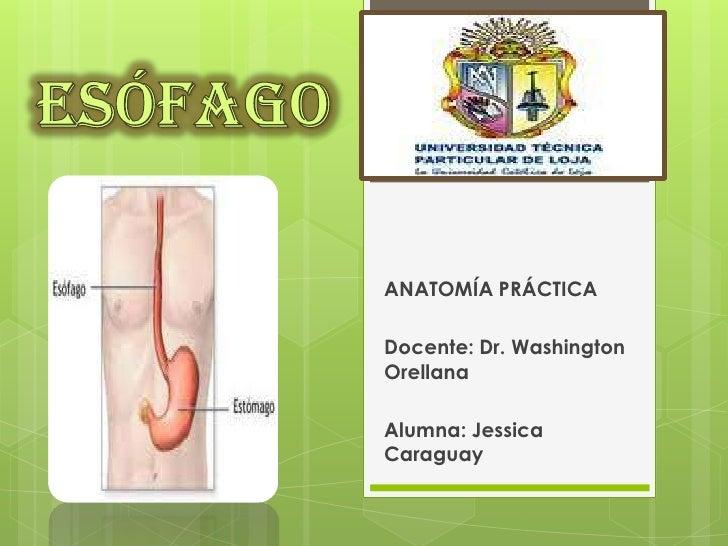 ANATOMÍA PRÁCTICADocente: Dr. WashingtonOrellanaAlumna: JessicaCaraguay