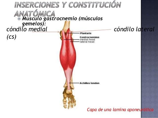 Arde el músculo gastrocnemio - Músculos gemelos y sóleo - Ejercicio ...