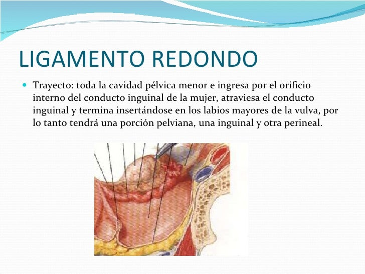Famoso Ligamento Redondo De La Anatomía útero Composición - Anatomía ...