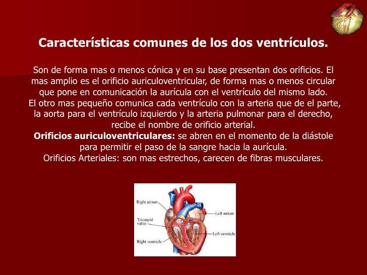 Puntero De Ubicación Con Un Corazón: Anatomia De Corazon
