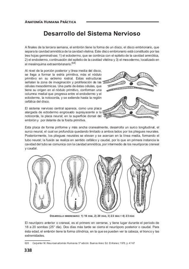 Anato dos neuro
