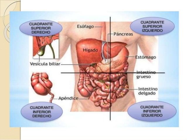 Topografia de la cavidad abdominal
