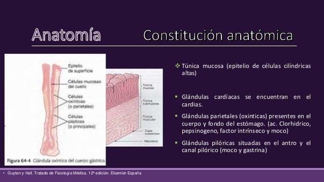 • Frank H. Netter. Atlas de Anatomia humana 5ª edición. Elsemier España, S.L. 2011. sección • Michel Latarjet, Alfredo Rui...