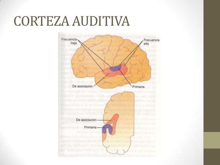 Anatomia y Fisiologia del oido; y Otitis