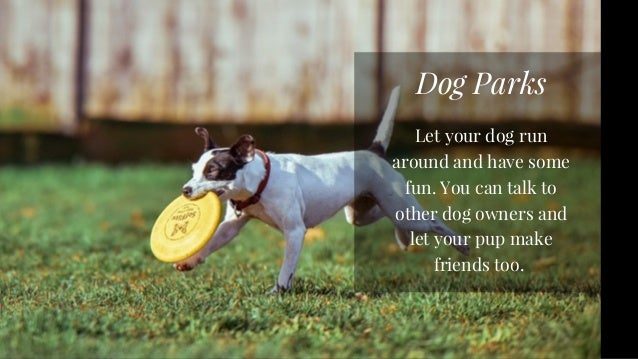 Fun Activities To Do With Your Dog Slide 2