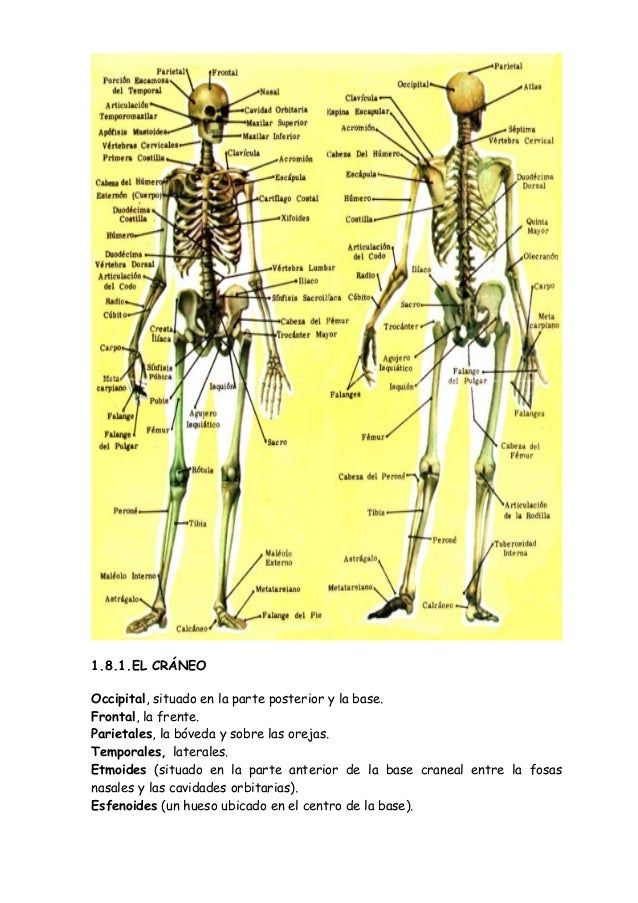 Lujo Partes Del Cuerpo Humano Dorso Ilustración - Imágenes de ...