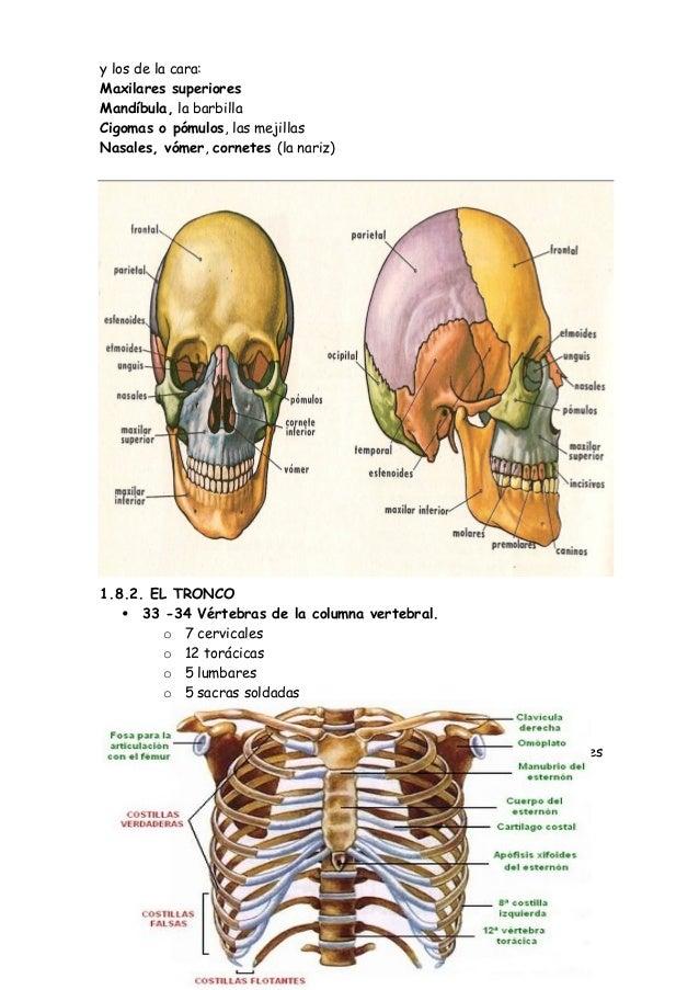 Fub Anatomía Del Cuerpo Humano
