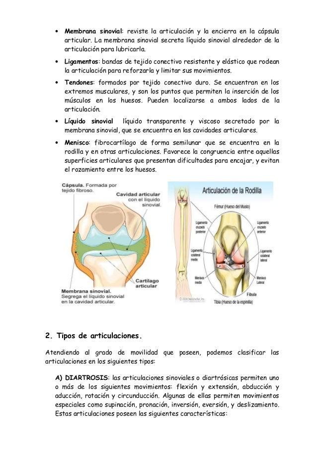 FUB - Anatomía del cuerpo humano