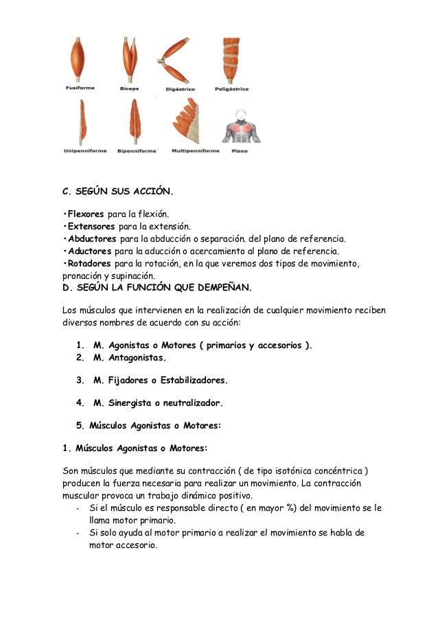 Famoso Anatomía Motor Primario Composición - Imágenes de Anatomía ...
