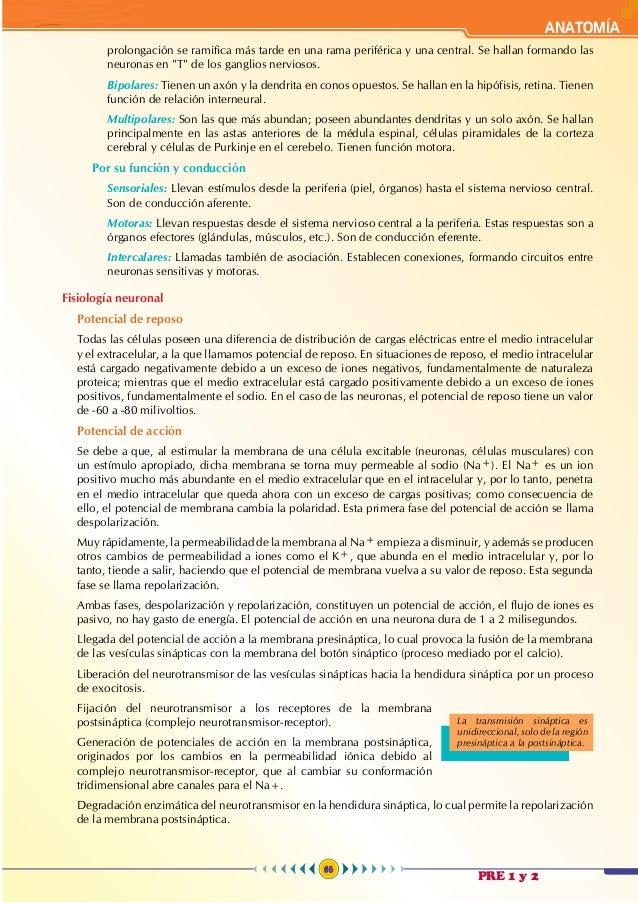 Anatomía 6 - teoría Wohler