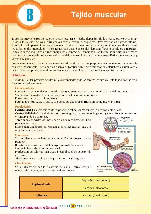 Anatomía 8 - teoría Wohler